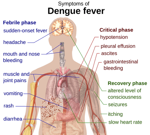 important-symptoms-of-dengue-that-you-need-to-know