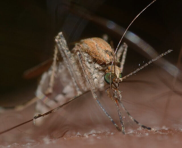 why-am-i-chosen-for-the-bite-of-a-mosquito